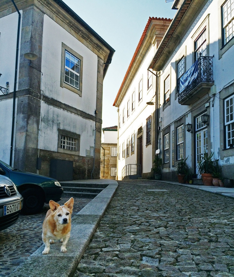 Fortaleza de Valenca village dog